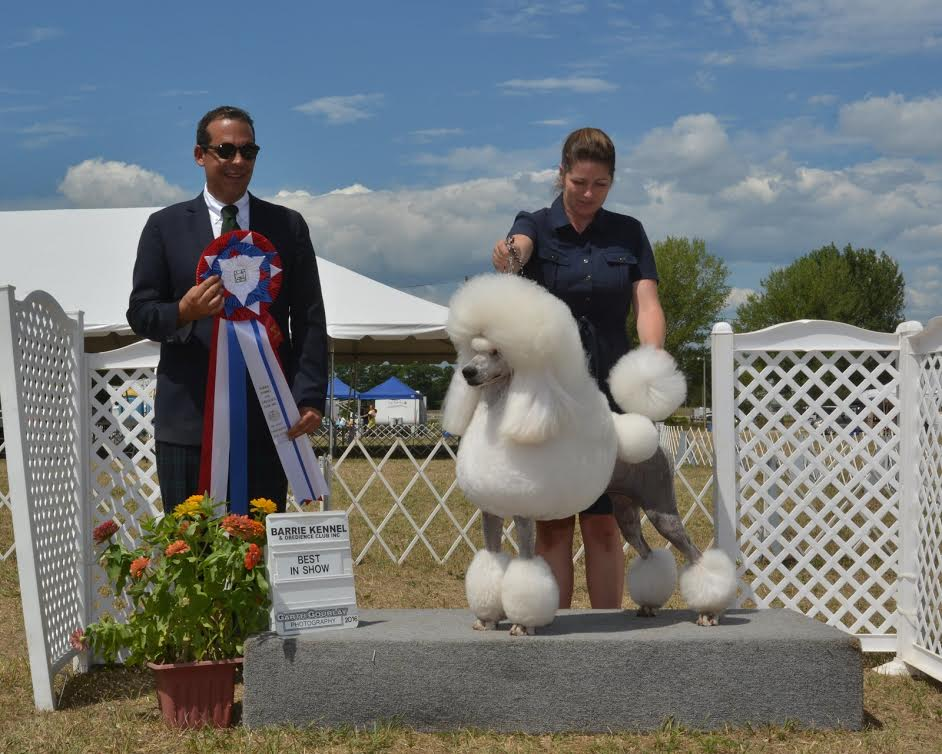 Barrie Kennel & Obedience Club - Annual Dog Show